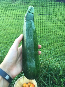Yippee! Some more zucchini!