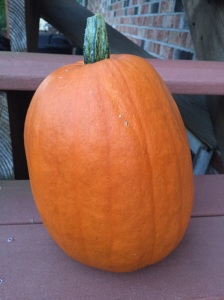 1 of the 2 pumpkins that we harvested so far!