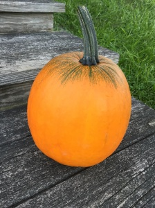 Our newest pumpkin